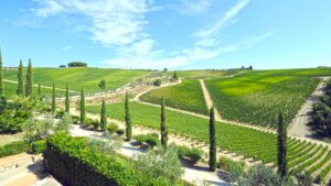 CHIANTI Classico vineyards in central Tuscany by TOLAINI winery