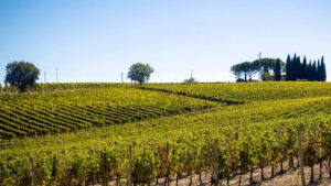 Just a few Km from the most famous Tuscany are the Sagrantino vineyards in the green heart of Italy