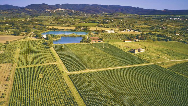 Southern TUSCANY, our iconic vineyards between Bolgheri and the Mediterranean Sea