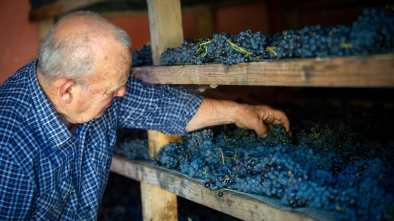 The Sagrantino grapes are worked by hand and with great wisdom by the winery's elders