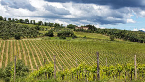 Tuscan endless vineyards in the middle of chianti area