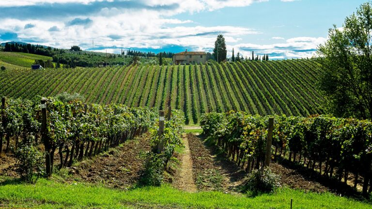 TUSCANY's absolutely classic vineyards at Ruffino