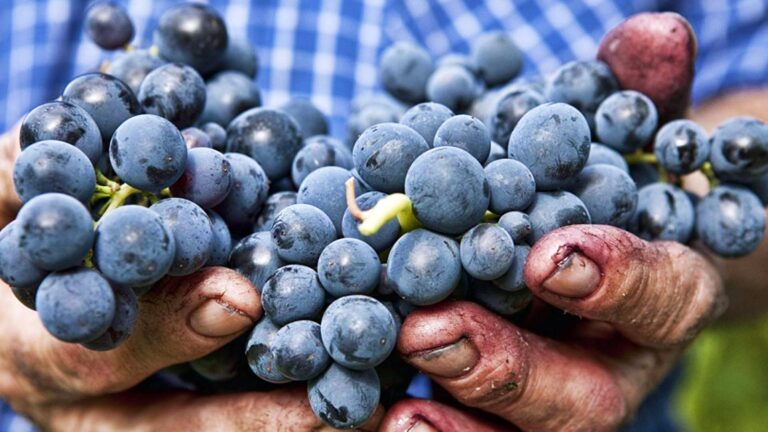 Tuscan spirits are distilled from hand harvested Tuscan grapes