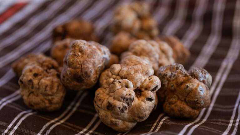 Tuscan truffle hunting exclusive experience has been really succesfull