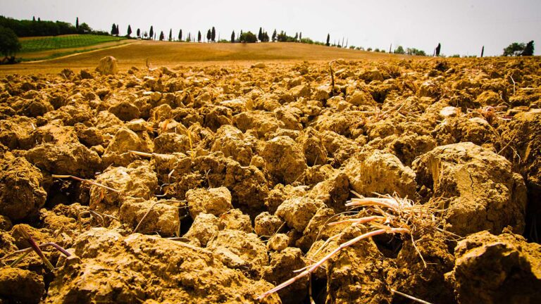 Under the Tuscan Sun -Tilled soil for the planting of new vineyards