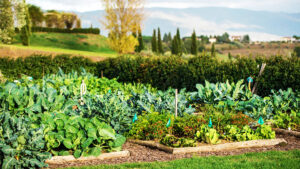 A Tuscan cooking lesson always starts from the chef's garden