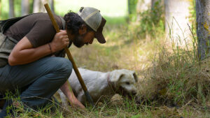 Truffle Hunting with your expert guide and the indispensable companion the dog