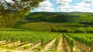 Wine inspired Cooking School with a view on endless vineyards