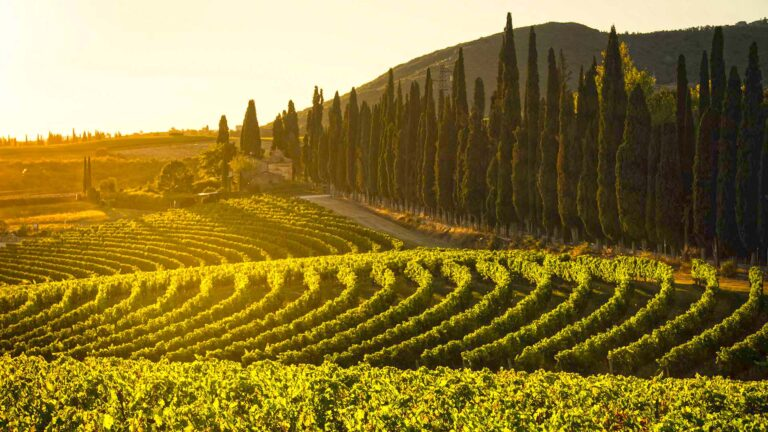 A cooking class with a view over Chianti Classico hills