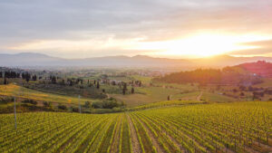 An Italian Wine Tour immersed in Tuscan vineyards