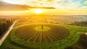 Food and wine tours in Italy - The most choreographic vineyard in Tuscany