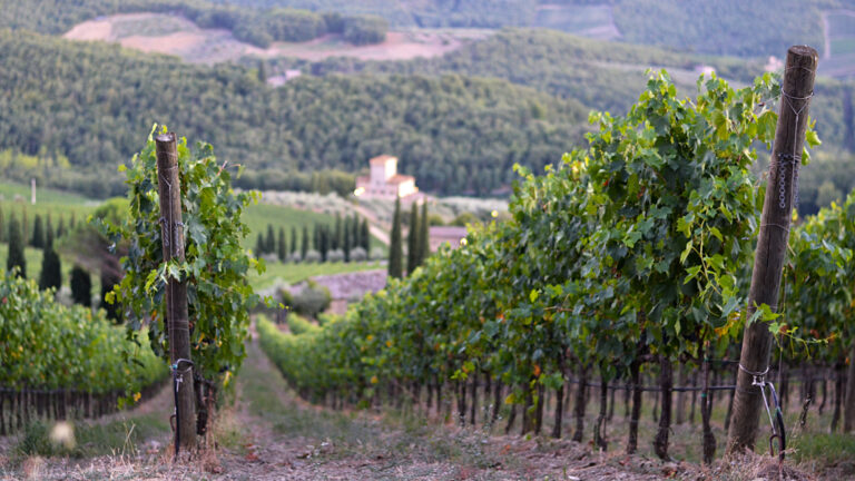 One day wine and food tour in TUSCANY - The most classic vineyards-on-hills