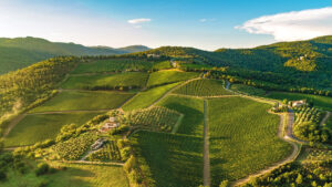 TOSCANA's most beatiful vineyards area is surely CHIANTI
