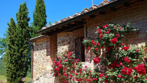TOSCANA wine tour - Cypresses, stones, wood, red bricks and roses
