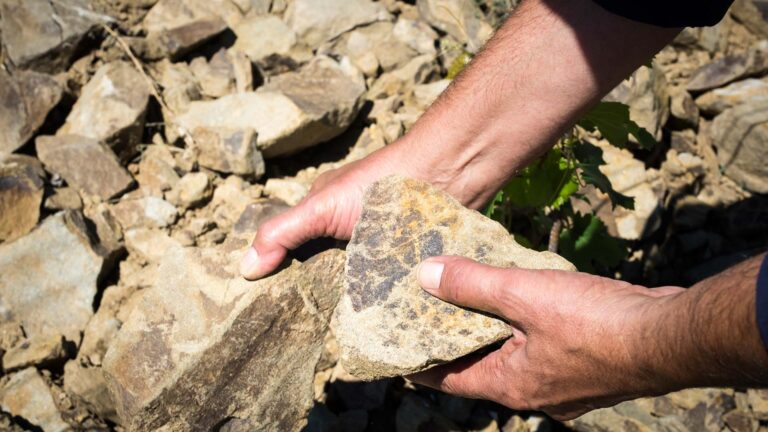 These are the stones that nurrish our vines in Chianti Classico area