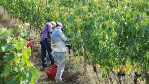 This is a TUSCAN HARVEST - obsessive attention to quality and tradition