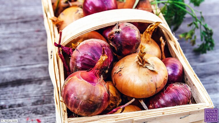 Onion Soup Renaissance story and original Tuscan recipe - freshly picked onions