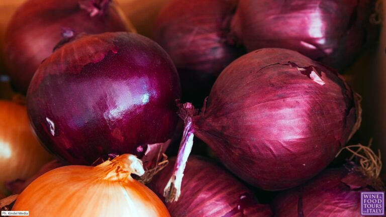 Onion Soup Renaissance story and original Tuscan recipe - varios types of onions
